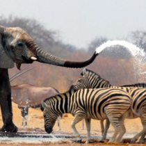 Africa draws just five percent of the world's tourists despite boasting attractions. Courtesy photo
